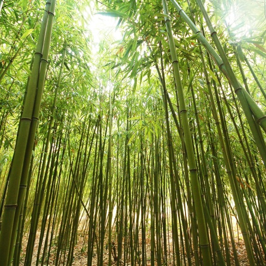 BambooStand