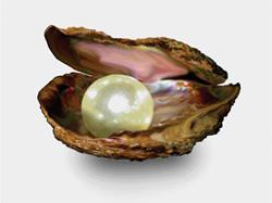 Image result for சிப்பியும் காகமும்