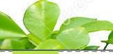 leaf-border-23321698