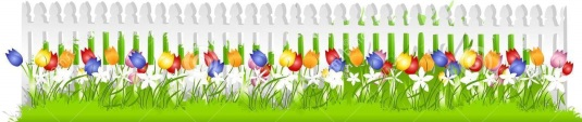 tulip-garden-clip-art-row-tulips-white-picket-fence-stock-photos---image--4463253-pictures